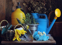 Work in the garden. Garden tools: watering can, shovel, bucket. Royalty Free Stock Photos