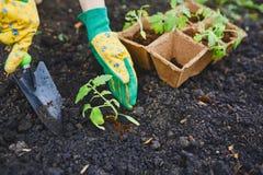 Work in garden Stock Photography