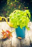 Work garden herbs flowers summer Royalty Free Stock Image