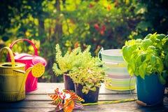 Work garden herbs flowers summer Stock Images