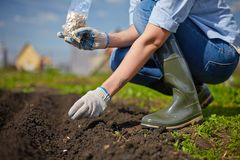 Work in the garden royalty free stock image