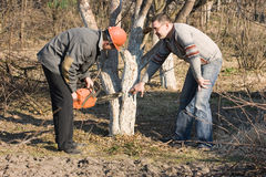 Work on the garden pruning. Which is carried out by two men Royalty Free Stock Images