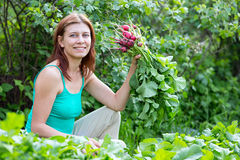 Work in the garden. woman collects radish harvest Royalty Free Stock Images