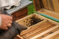 Work at home with bees stock images