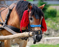 Work horse Royalty Free Stock Images