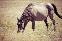 Work Horse Graing in Field in Rural America Stock Photos