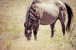 Work Horse Grazing in a Field Rural America Stock Photos