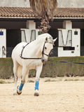 Work horse in hands. Spain Royalty Free Stock Photos