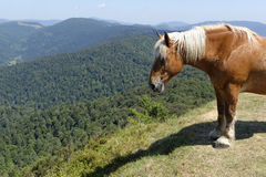 Work horse in the mountains Stock Photo