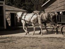 Work Horses Stock Photography