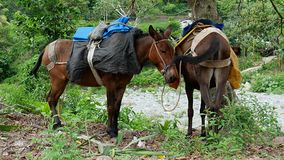 Work horses resting in nature stock photos