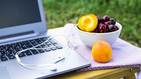 Freelance outdoor summer work concept. Work on a laptop on a picnic in nature - next to a bowl of cherries and apricots. Freelancer work concept Stock Photography