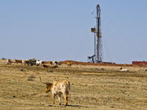 Work Over Rig and Longhorn Cattle royalty free stock photos