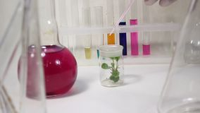 Work with the plants in the laboratory. stock video footage