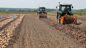 Work on the the potato harvest stock footage