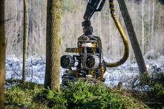 Work tool petrol chainsaw lying on log in the forest.  stock photo