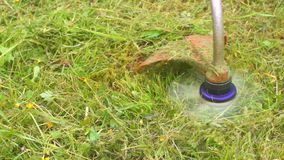 Work trimmer mowing grass close-up. Slow mo stock video footage