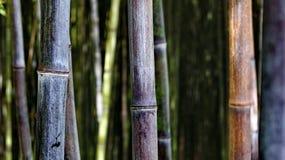 Workart di Bambu Fotografia Stock Libera da Diritti
