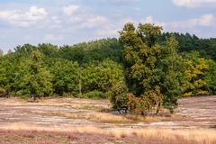 Worked area in nature reserve  Fischbeker heathland in south of Hamburg. Royalty Free Stock Photo