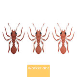 Worker Ant Royalty Free Stock Images