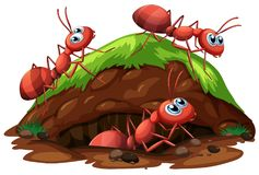 Worker Ants on White Background. Illustration royalty free illustration