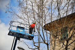 Worker assigned to the pruning. Pruning of a tree in city Stock Photo