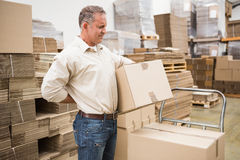 Worker with backache while lifting box in warehouse. Side view of worker with backache while lifting box in the warehouse Royalty Free Stock Images