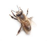 Worker bee stock photos