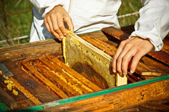 Worker bees on honeycomb Royalty Free Stock Photography