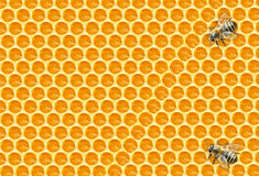 Worker Bees on Honeycomb Royalty Free Stock Images