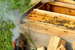 Worker Bees on Honeycomb Stock Photography