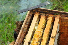 Worker Bees on Honeycomb Stock Photo