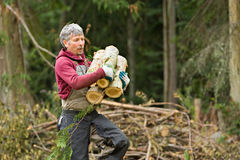 Worker carrying firewood rounds Stock Photos
