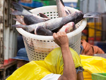 Worker carrying fish at market Royalty Free Stock Image