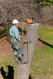 Worker with Chainsaw. While strapped to the tree and with his tree climbing spikes dug in, a worker has just finished cutting through the tree trunk. The crane Stock Image