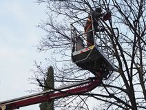 A worker with a chainsaw prunes the trees from an aerial platform on a gray winter day.  stock photography