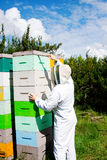 Worker checking beehives Stock Images