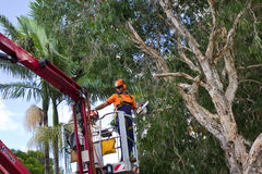 Worker on cherry picker with chainsaw. MAROOCHYDORE, QLD, AUSTRALIA - APR 12 2011: Unidentified worker using chainsaw and crane lift on Apr 12, 2011 at Royalty Free Stock Images