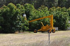 Worker in cherry picker picking fruit avocados in orchard. Avocado fruit trees being picked by worker in an elevated work platform or cherry picker stock photography
