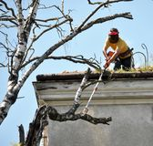 A worker of a municipal utility chainsaw cuts an old tall tree. A worker of a city municipal utility chainsaw cuts an old tall tree royalty free stock photos