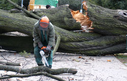 Worker clean the fallen tree. After-effects of windstorm in Middle Europe Royalty Free Stock Photo