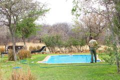 Worker cleaning swimming pool lodge, Namibia. African man is cleaning the swimming pool in the Onguma game reserve lodge, close to Etosha, in Namibia Royalty Free Stock Photo