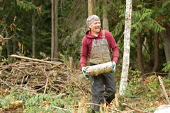 Worker clearing land for firewood Royalty Free Stock Photos
