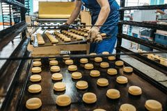 Worker at confectionery factory puts trays with cookies from dough into special stand for cooking in stove. Food industry. Cookie production royalty free stock images