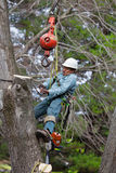 Worker connecting a cable to tree trunk. With his tree climbing spikes dug firmly in the trunk of the tree, a worker is hanging from the crane while strapping a Royalty Free Stock Photos
