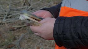 Worker counting euro banknotes in forest stock footage