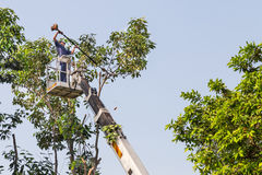 Worker on crane cutting tree branches with a chain saw Royalty Free Stock Image