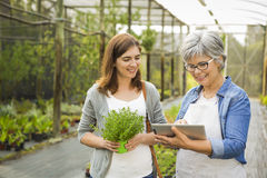 Worker and customer in a green house Stock Image