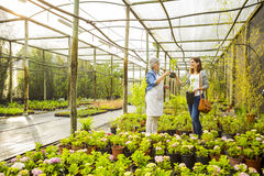 Worker and customer in a green house Royalty Free Stock Images