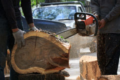 Worker cutting bark tree in the garden home Royalty Free Stock Photos